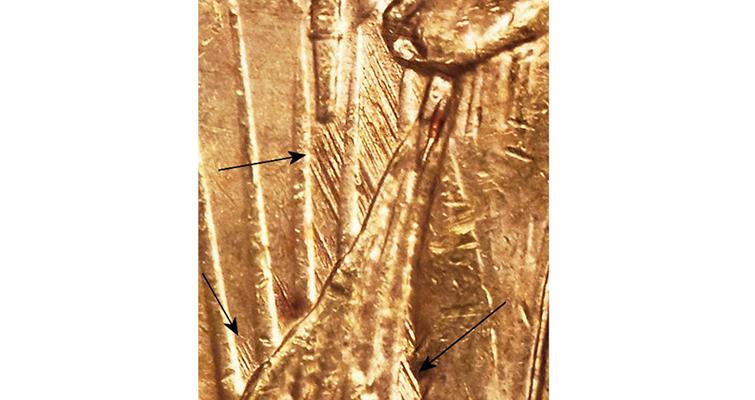 1922-s-detail-arrows