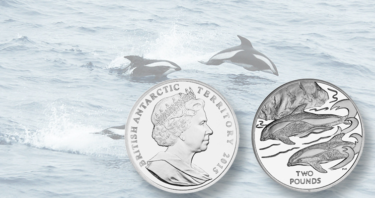 Hourglass dolphin swims on British Antarctic Territory coin