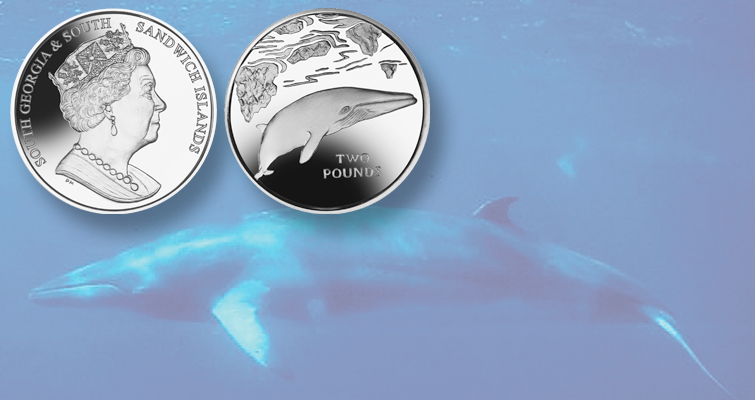 Minke whale features on new commemorative coins from Pobjoy Mint