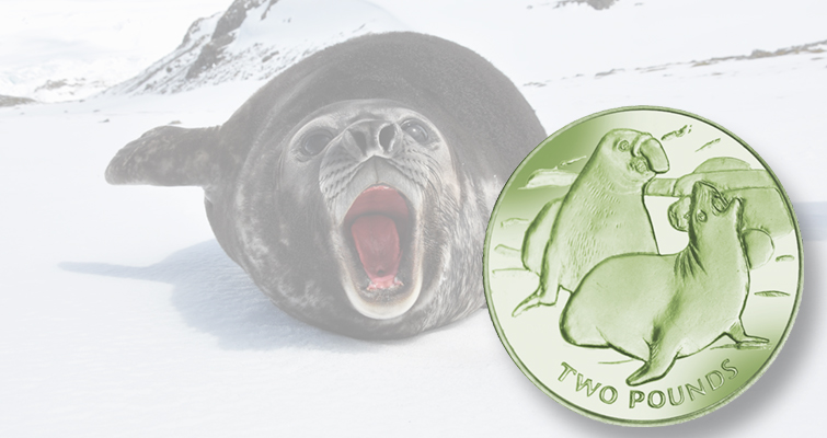 Elephant seal coin available in titanium from Pobjoy Mint