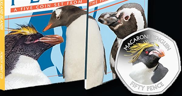 2018-falkland-islands-macaroni-penguin-pack-lead