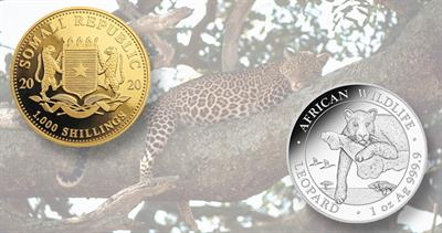 2020-somalia-leopard-coins