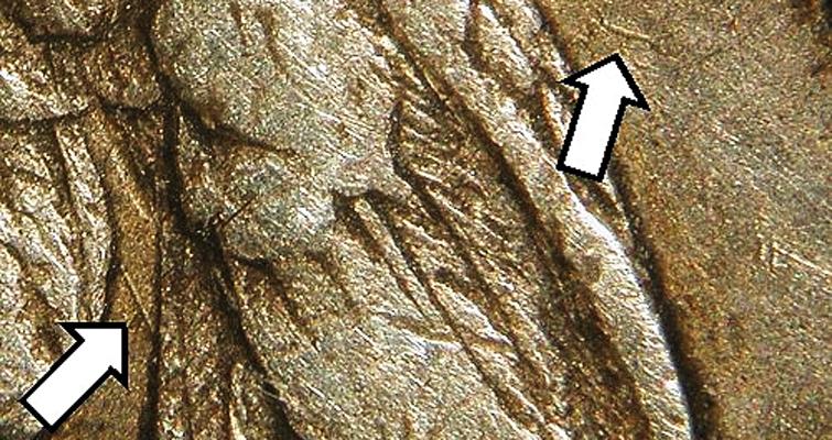 bf-1-rev-dielines-arrows