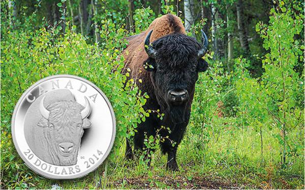 bison-and-coin
