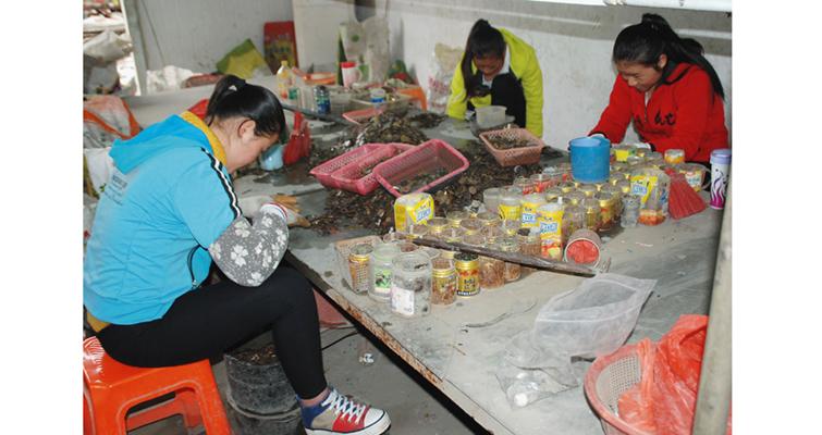 foshan-workers-manually-sort